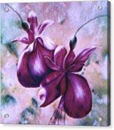 Fat Fuchsia Acrylic Print