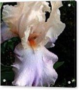 Favorite Iris Acrylic Print