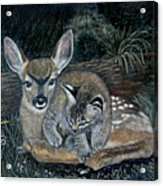 Fawn And Cat Acrylic Print