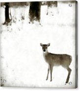 Fawn In The Snow Acrylic Print