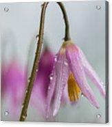 Fawn Lilies In The Rain Acrylic Print