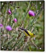 Feasting In The Flowers Acrylic Print