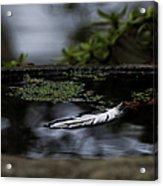 Floating On A Still Pond Acrylic Print