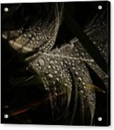 Feather Acrylic Print