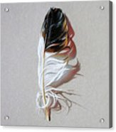 Feather And Shadow 3 Acrylic Print