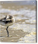 Feather Bed Acrylic Print