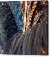 Feather Fun Acrylic Print