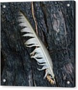 Feather In Burnt Tree Acrylic Print