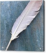 Feather Of A Dove Acrylic Print