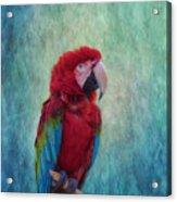 Feathered Friend Acrylic Print