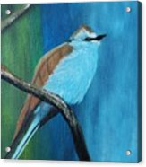 Feathered Friends Second In Series Acrylic Print