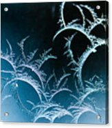Feathered Frost Acrylic Print
