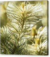 Featherheads Acrylic Print