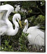 Feathering Their Nest Acrylic Print