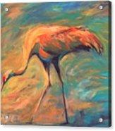Feathers Acrylic Print