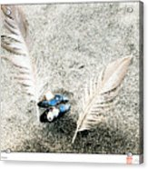 Feathers And Mussel Acrylic Print