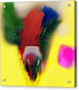 Feathers In Wine Glass Acrylic Print