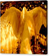 Feathers Of Light - Gold Acrylic Print