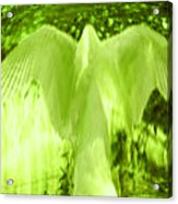 Feathers Of Light - Green Acrylic Print