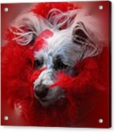 Feathers Of Red Acrylic Print