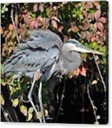 Feathers Ruffled Acrylic Print