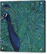 Feathery Fan Acrylic Print