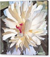 Feathery Flower Acrylic Print by Ken Powers