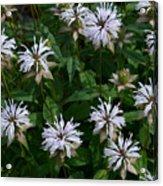 Feathery Petal Flowers Acrylic Print
