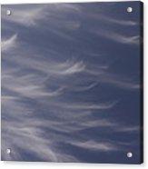 Feathery Sky Acrylic Print