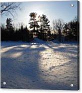 February Pine Tree Shadows Acrylic Print