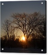 February Sunrise Behind Elm Tree Acrylic Print