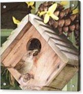 Feeding Birds Acrylic Print