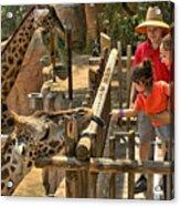 Feeding Giraffe 2 Acrylic Print