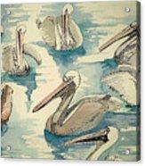 Feeding Pelicans Acrylic Print