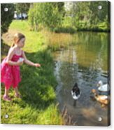 Feeding The Ducks Acrylic Print