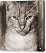 Feline Acrylic Print
