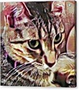 Feline Fancy Acrylic Print