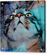 Feline Focus Acrylic Print