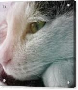 Feline Zen Acrylic Print