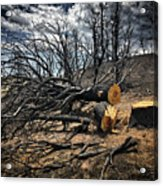 Felled After The Wildfire Acrylic Print