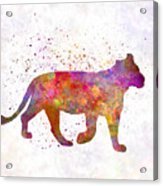 Female Lion 01 In Watercolor Acrylic Print