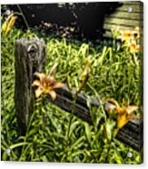 Fence And Flowers Acrylic Print