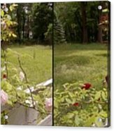 Fence Full Of Roses - Cross Your Eyes And Focus On The Middle Image Acrylic Print