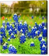 Fence Me In With Flowers Acrylic Print