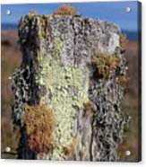 Fence Post Encrusted With Lichen  Acrylic Print