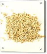 Fennel Seed Acrylic Print