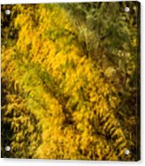 Fens In Fall Color Acrylic Print