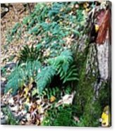 Fern And Moss I Acrylic Print