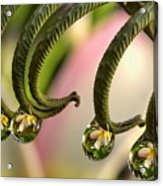 Fern And Plumeria Acrylic Print