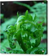 Fern Art Prints Green Forest Ferns Giclee Baslee Troutman Acrylic Print